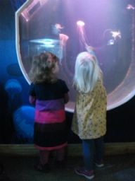 Looking at the jellyfish