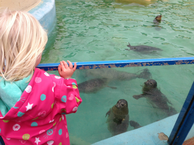 Watching seals at Hunstanton Sealife
