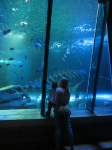 Shark tank at Hunstanton Sea life
