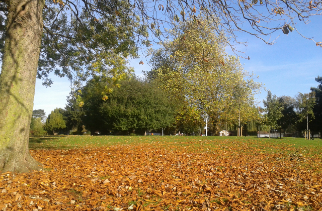 Autumn at Central Park, Peterborough