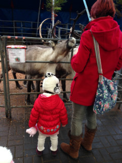 Feeding the reindeer outside.