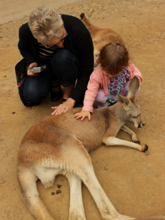 Stroking a kangaroo at Currumbin Wildlife Sanctuary
