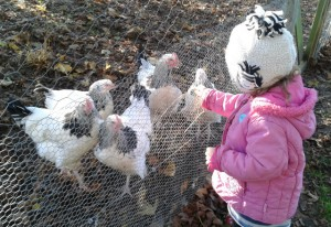 Feeding the chickens at Sacrewell Farm