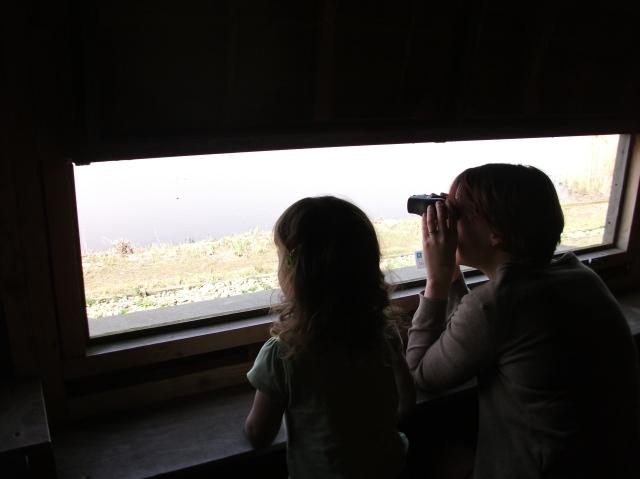 Birdwatching at Welney Wetland Centre